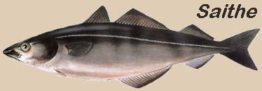 tipos bacalhau 2