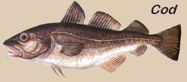 tipos de bacalhau